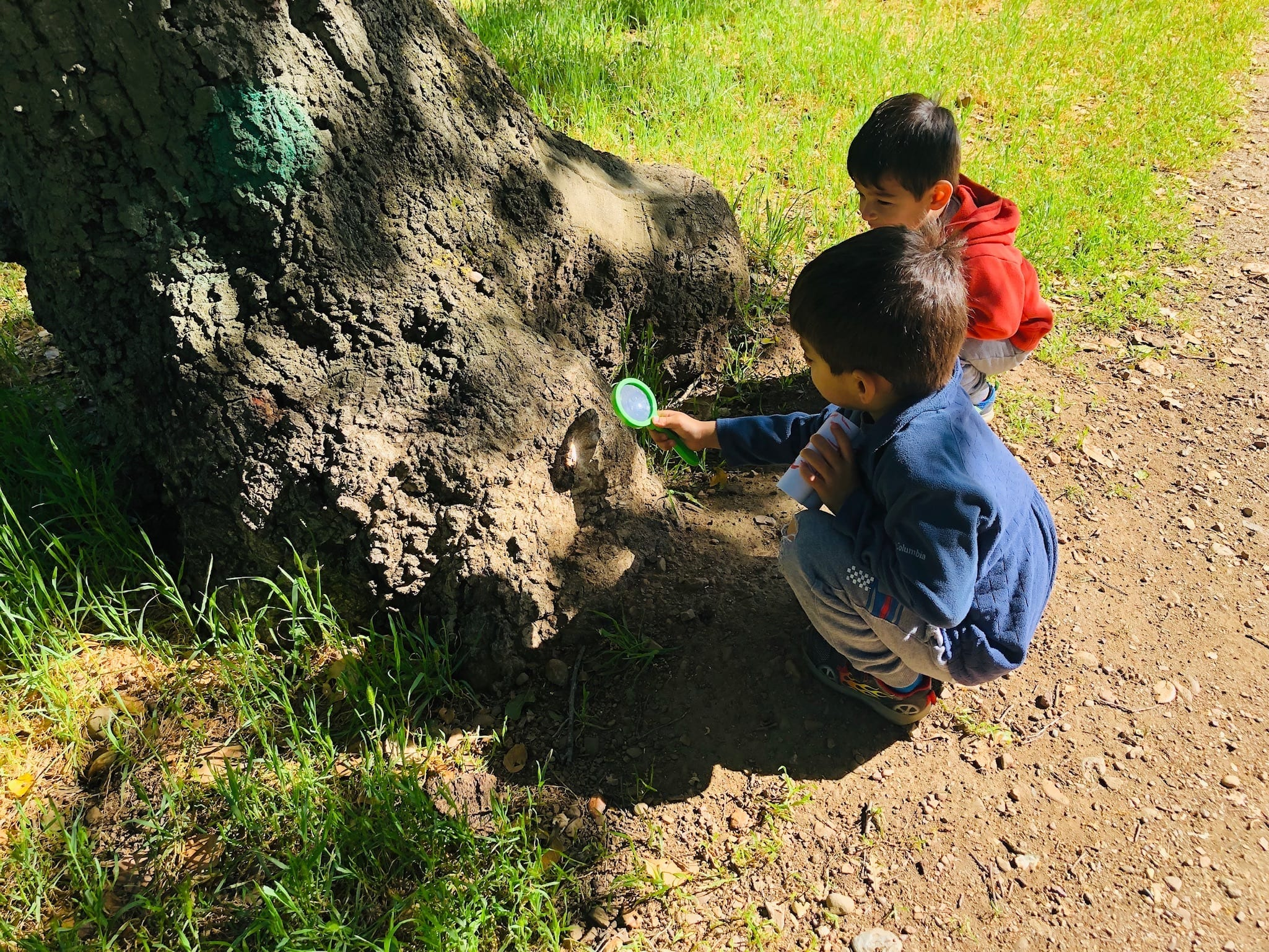 The boys looking for ants at the root of a tree