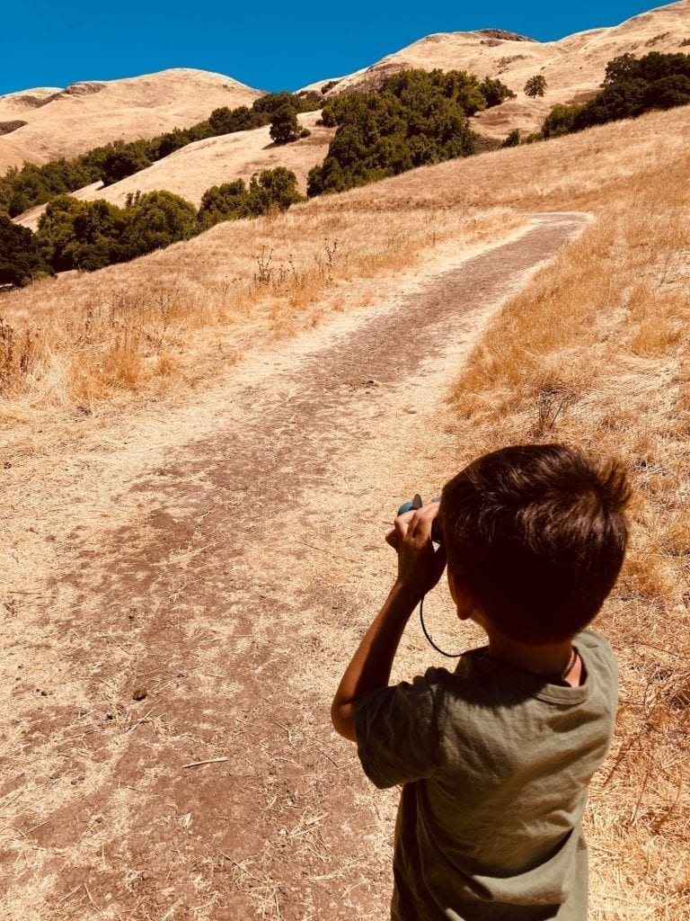 JJ watches birds of prey in the Milpitas Foothills - South Bay Hikes with Kids