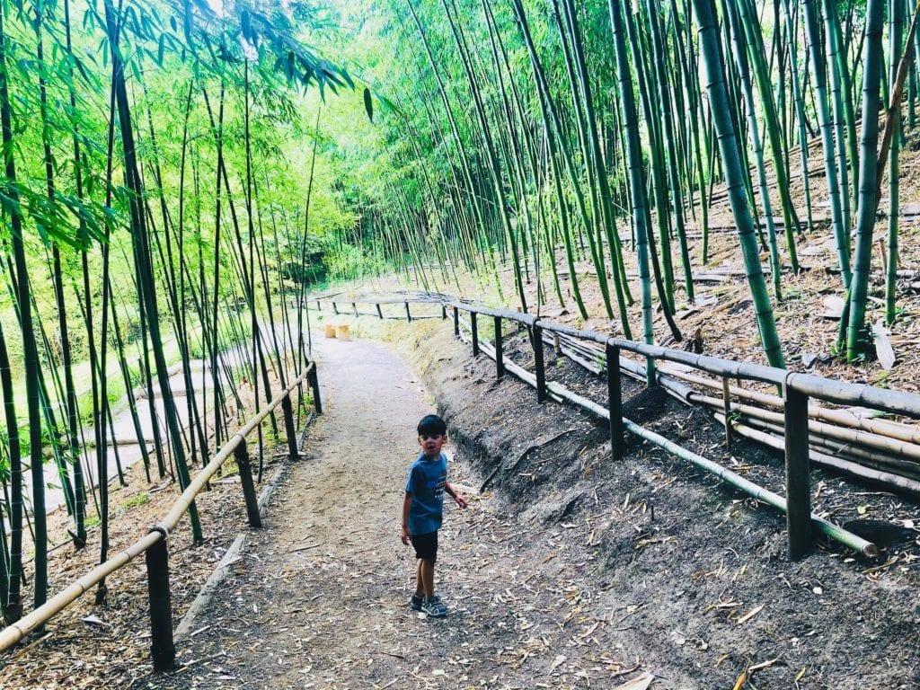 Hakone Gardens - Bamboo