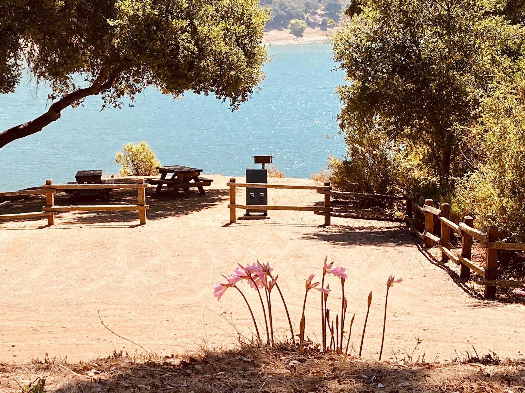 Picnic Table at Faultline Picnic Area, Coyote Lake