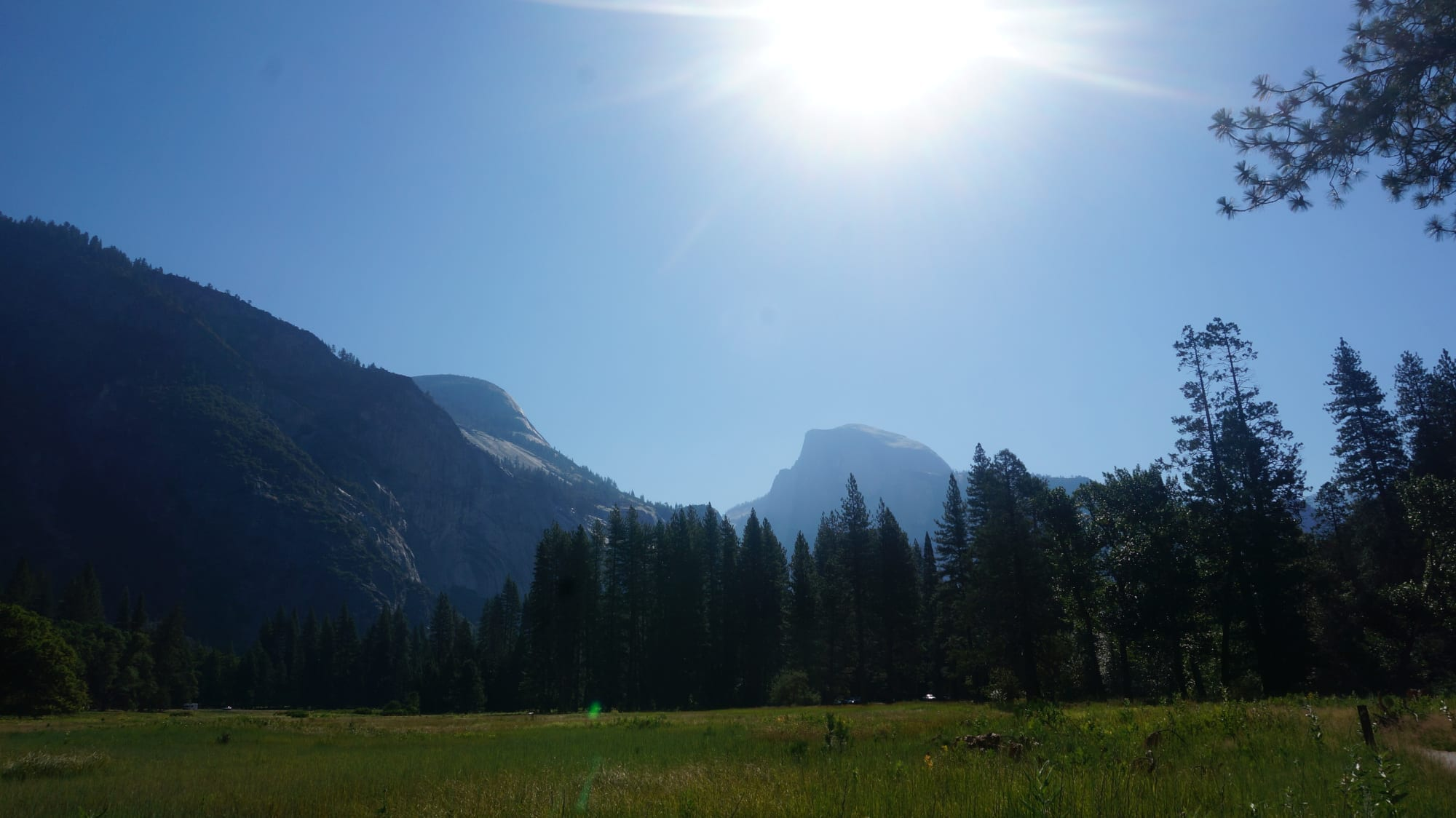 Half Dome from a quiet Cook's Meadow