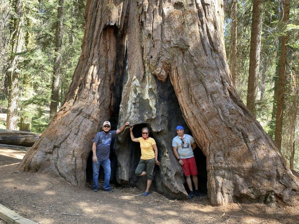 The Family Tree - John and his parents posing in the sequoia roots at the McKinley Grove