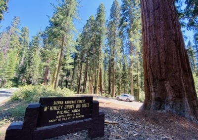 We were happily surprised by the short path through the McKinley Grove of Giant Sequoias, just 6 miles beyond the Dinkey Creek Campground.