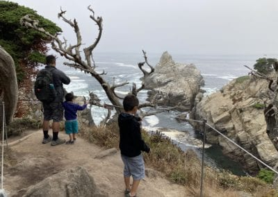 Seabirds on Cypress Grove Trail - Point Lobos Hike