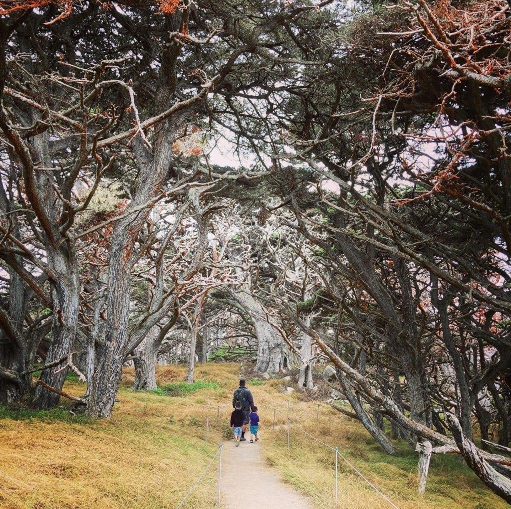 Cypress Grove Trail - Point Lobos Hike