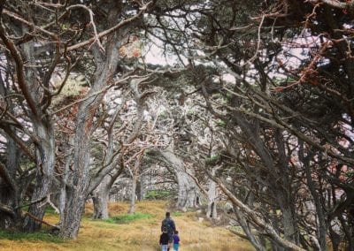 Cypress Grove Trail - Point Lobos Hike