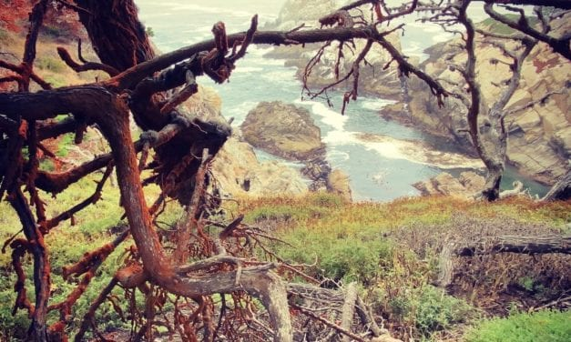 Point Lobos Hikes You Don't Want to Miss