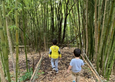 Detour Through Bamboo Forests, San Francisco Botanical Gardens with Kids