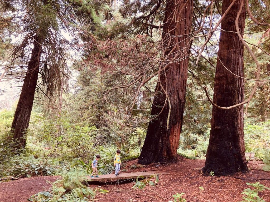 Kids Enjoying the Redwood Grove at the San Francisco Botanical Garden