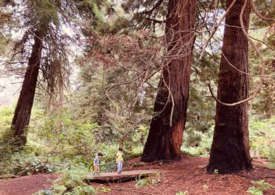 Kids Enjoying the Redwood Grove at the San Francisco Botanical Garden