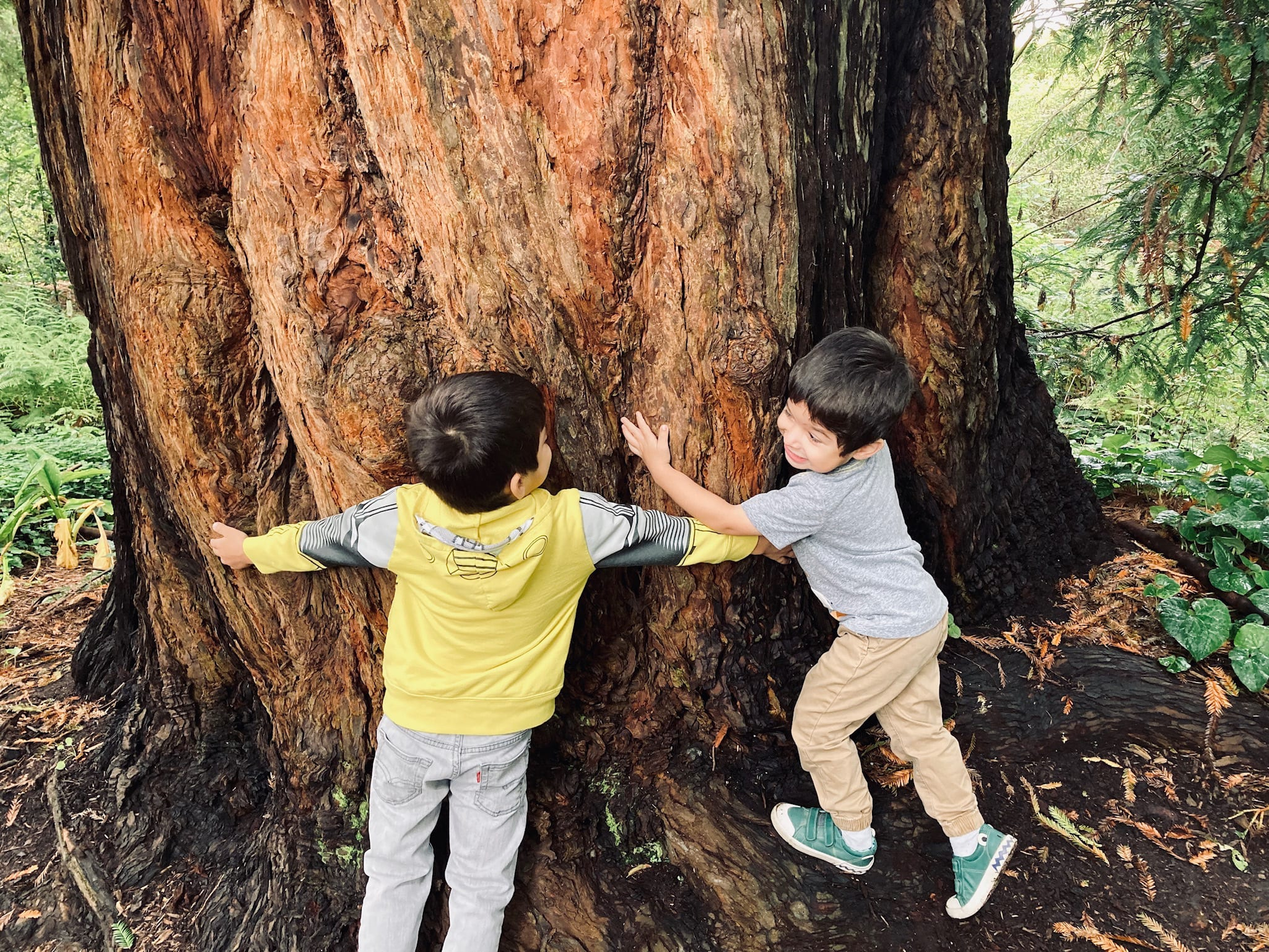 Kids Enjoying the Redwood Grove at San Francisco Botanical Gardens