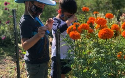 Bay Area Gardens for Hands-On Family Fun