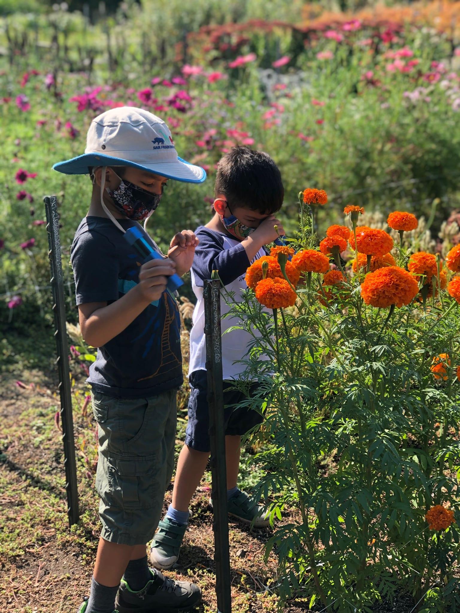 Bay Area Gardens - Filoli