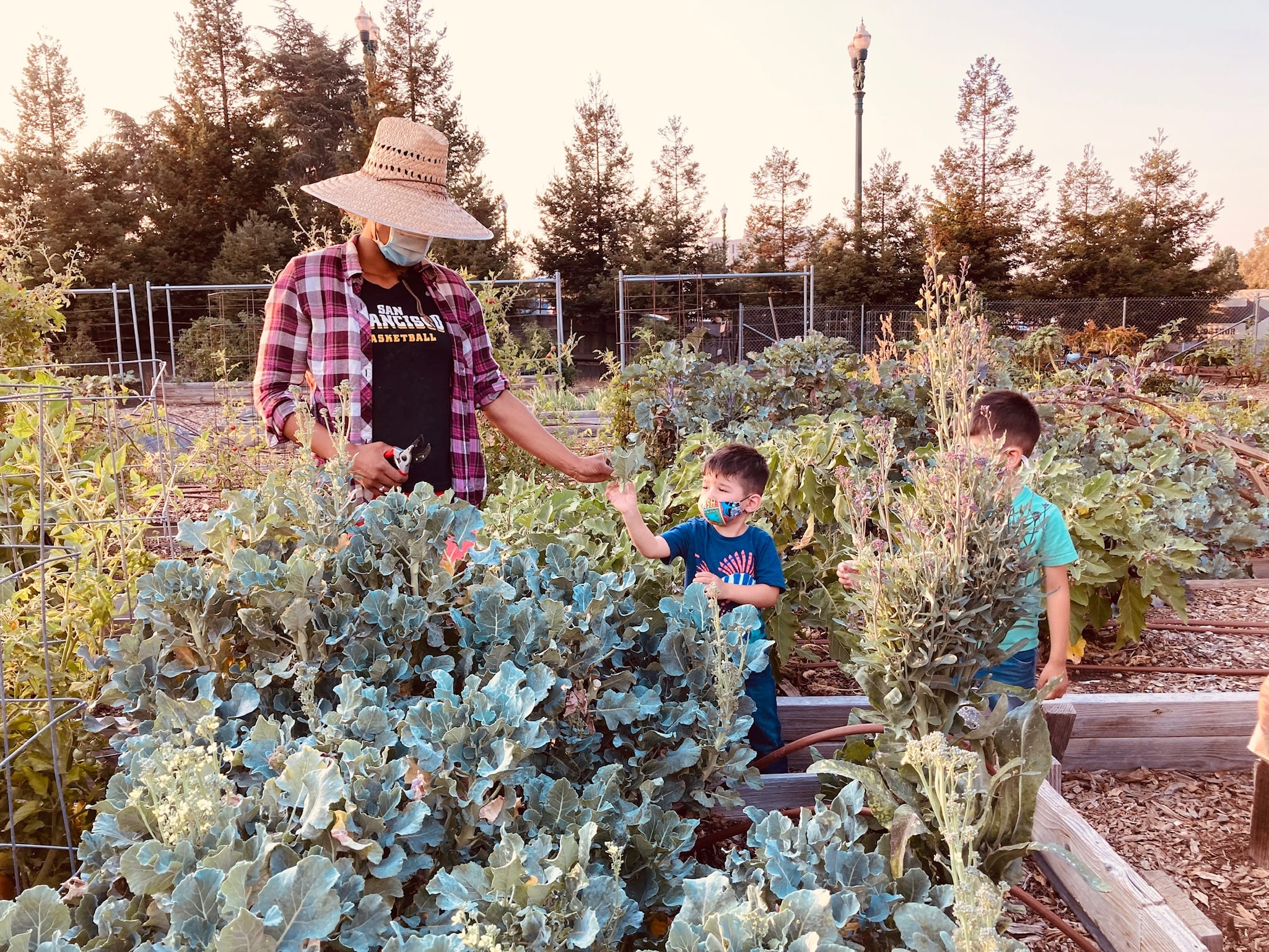 Bay Area Gardens - Volunteering at Taylor Street Farm
