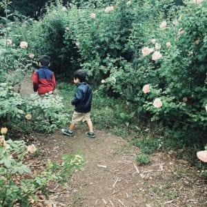 Bay Area Gardens - Gardens at Heather Farm
