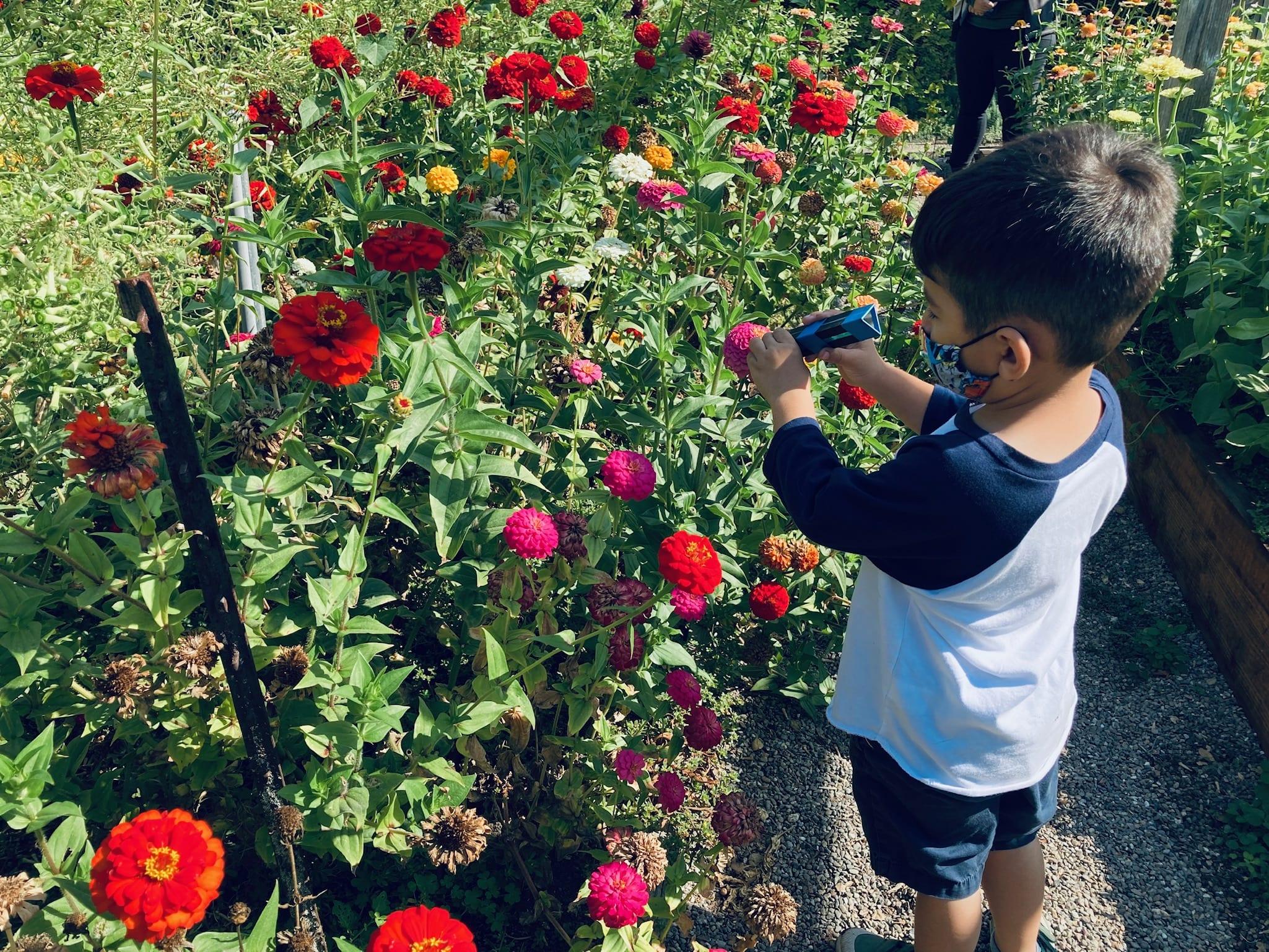 Bay Area Gardens: Filoli Flowers