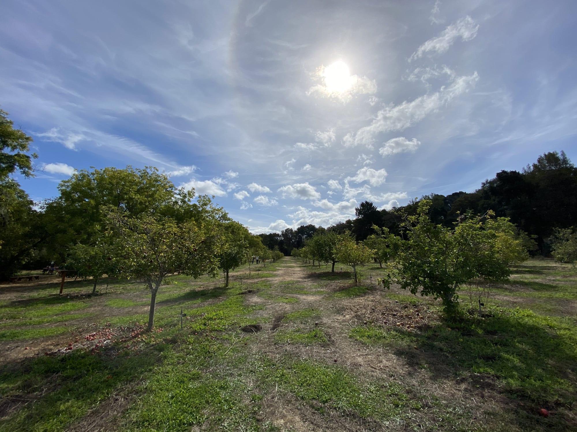 Filoli Gentlemen's Orchard - Orchard Days