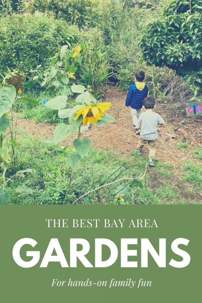 Pinterest pin on Bay Area Gardens and Farms Post - boys walking through the Children's Garden at SF Botanical Garden