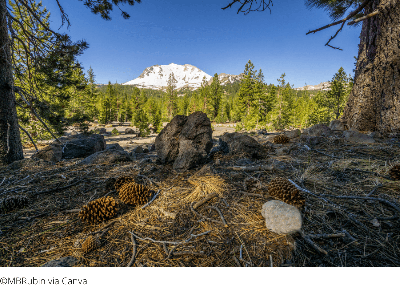 Things to do in Lassen - Devastated Area