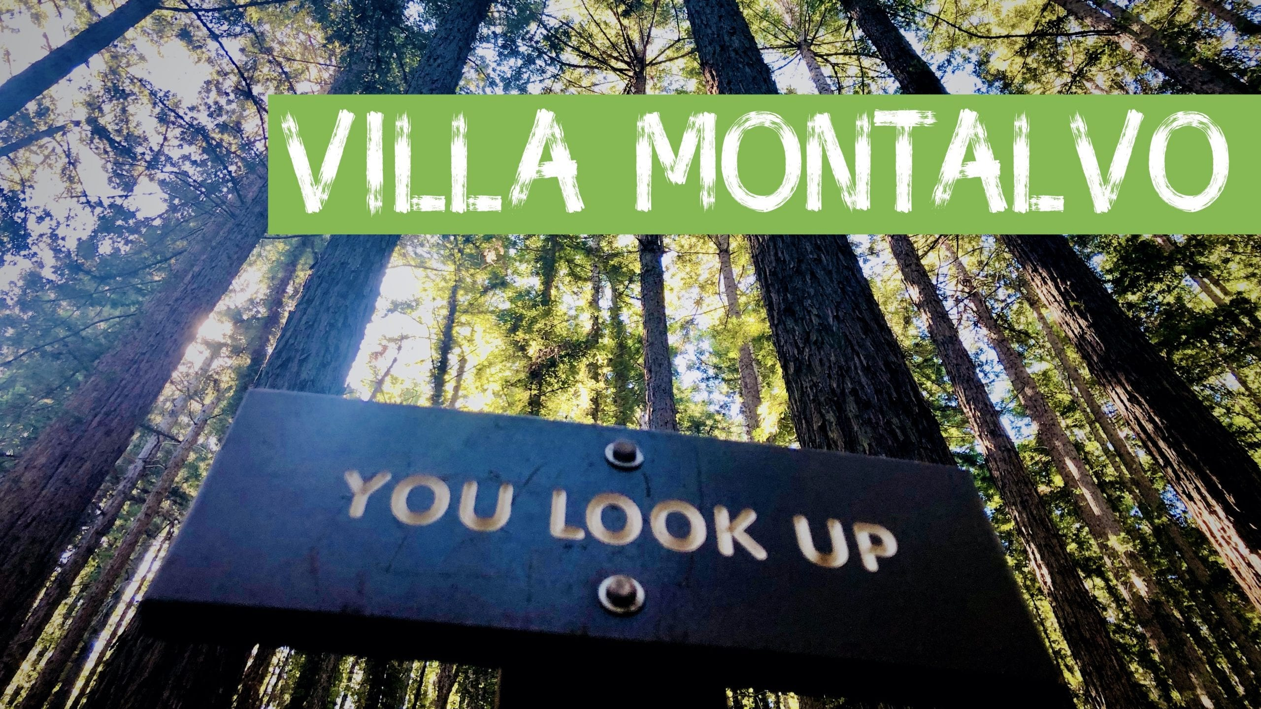 Redwood Tree Cover for Villa Montalvo YouTube Link