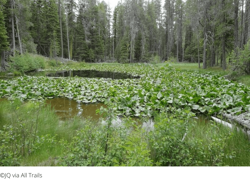 Things to Do in Lassen - Lily Pond Nature Trail