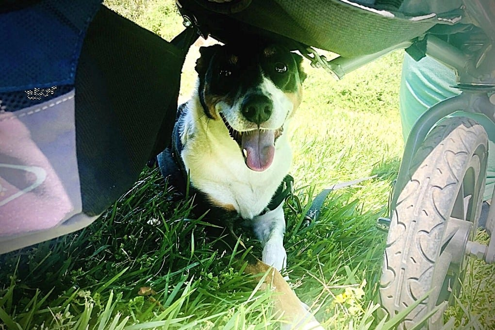 Our dog enjoying shade beneath our stroller at Montalvo
