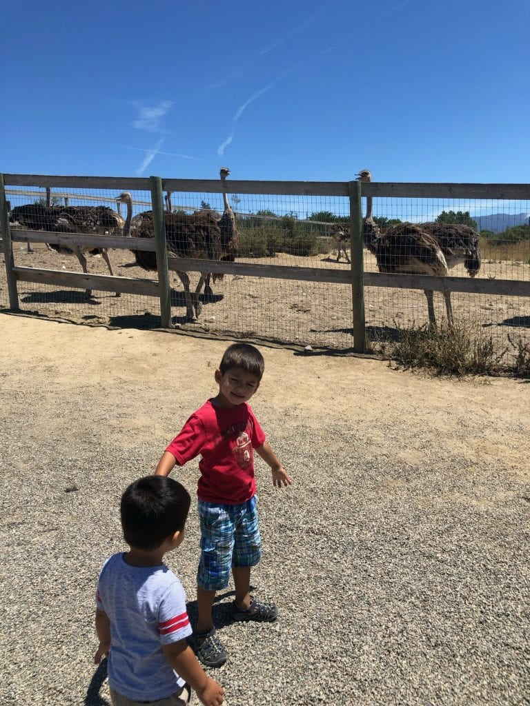 JJ & The Bug posting with Ostriches, Ostrichland USA