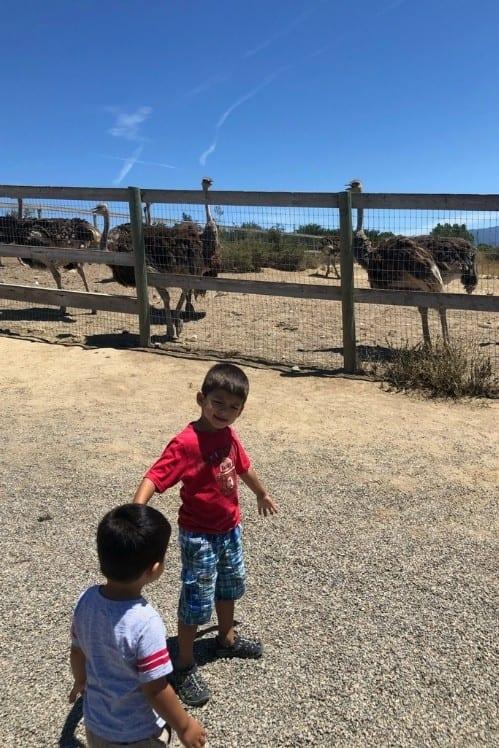 Boys playing at Ostrichland USA
