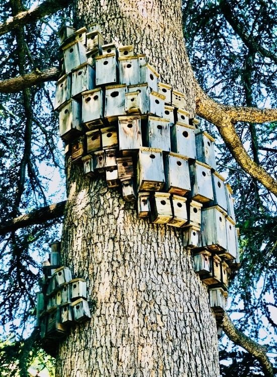 """Cameron Hockenson's """"Control Tower"""" are bird boxes wrapped around a tree in Villa Montalvo"""