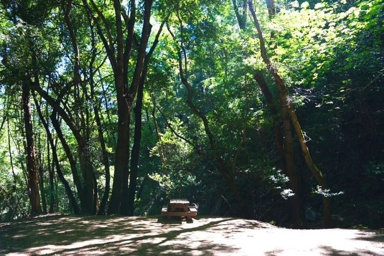 The Myrtle Flats Picnic Area at Uvas Canyon Waterfall Loop