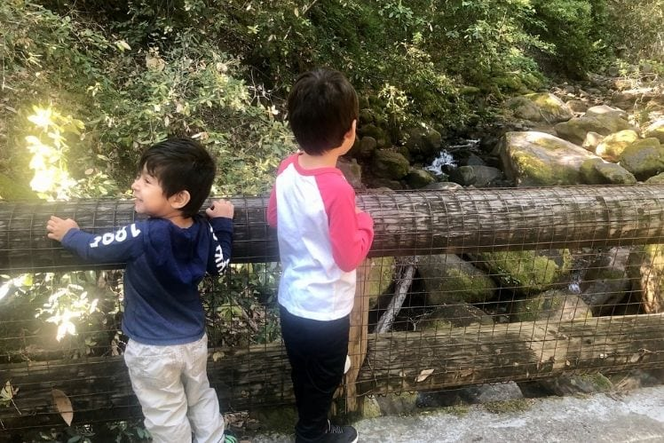Boys excited by the bridges at Uvas Canyon Waterfall Loop