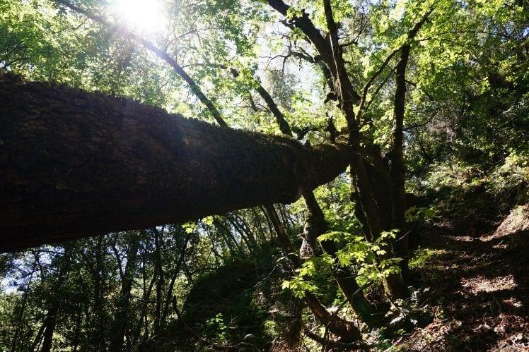 Fallen Trees and boulders on the Uvas Waterfall Loop