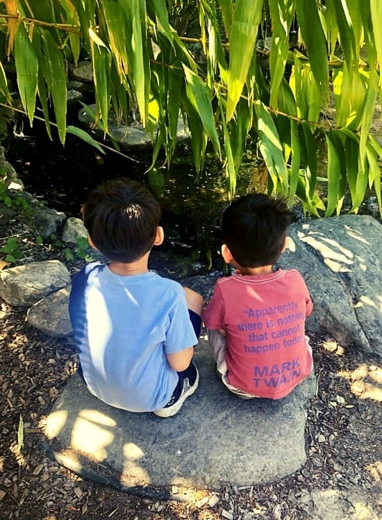 The boys tadpole watching at the Mermaid Pond