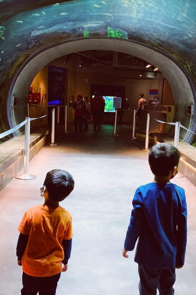 Boys walking through tunnel under the aquarium at the California Academy of Sciences in Golden Gate Park. This is a great road trip stop while driving Highway 1 with kids.