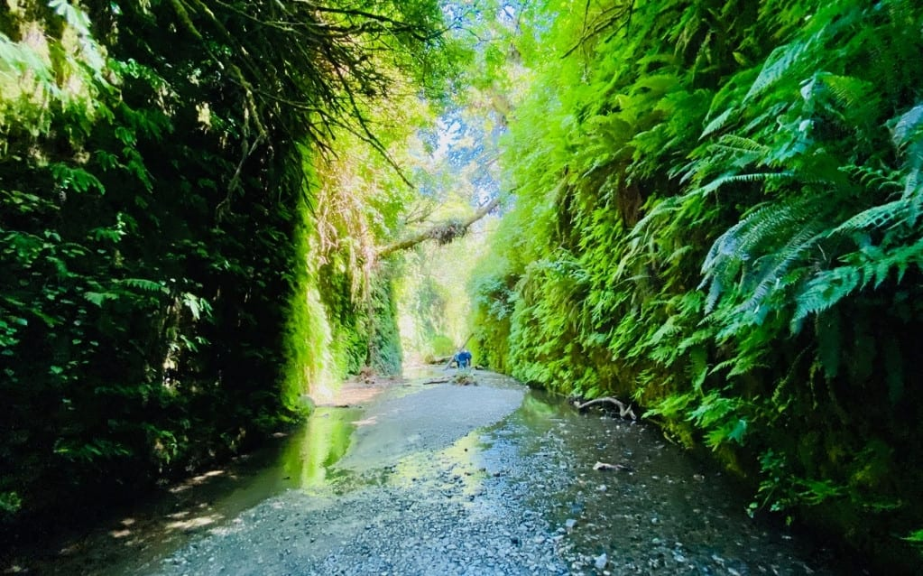 Walking through Fern Canyon is one of the best family-friendly hikes in the park.
