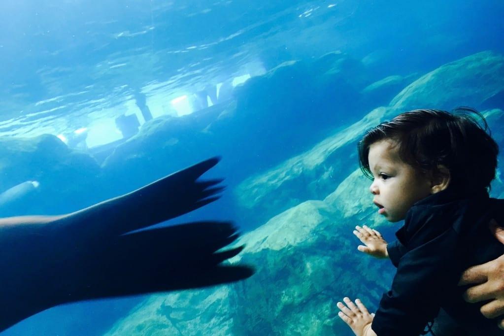 Baby JJ looking at fish in t he Long Beach Aquarium.