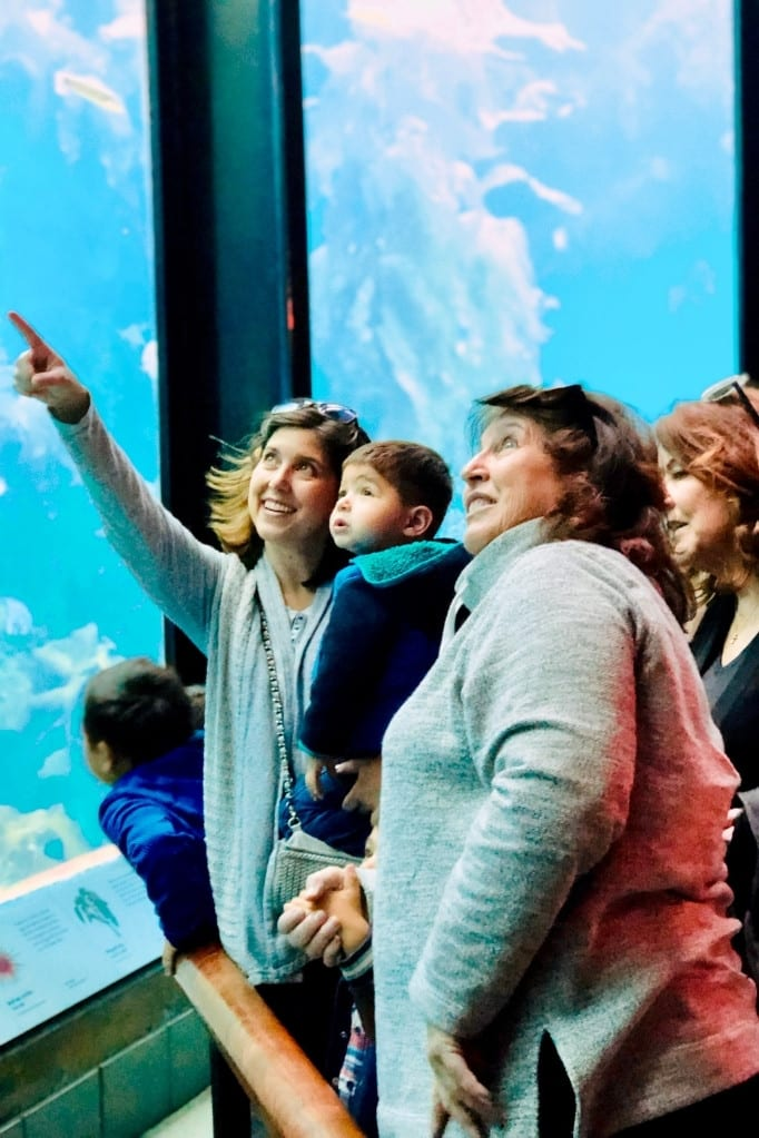 Monterey Bay Aquarium's Kelp Forest is awe-inspiring for all ages. Definitely try to stop here on a Highway 1 road trip with kids.