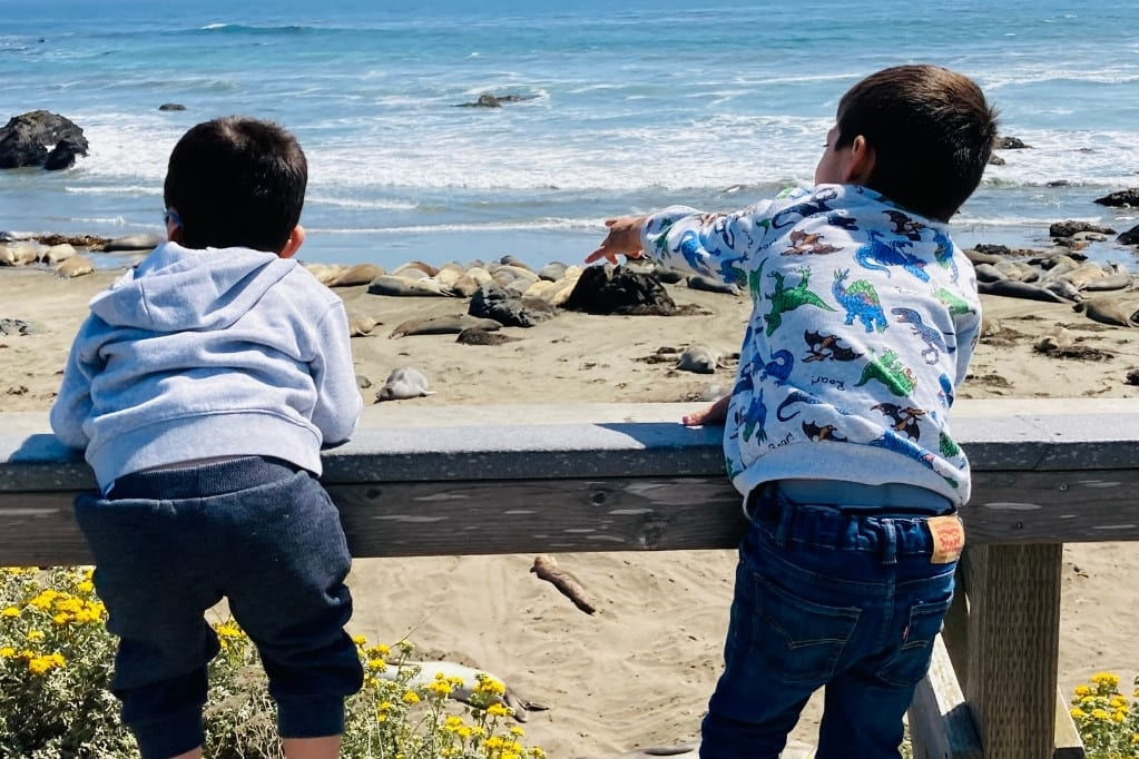 The boys love looking at Elephant Seals at Piedras Blancas. This is a fun and easy stop on any highway 1 road trip with kids.