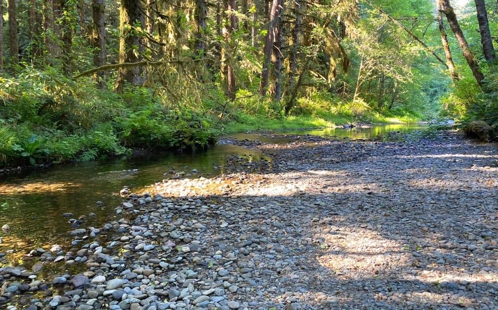Prairie Creek accessed through campsite 55 in the Elk Prairie Campground, Prairie Creek Redwoods National Park