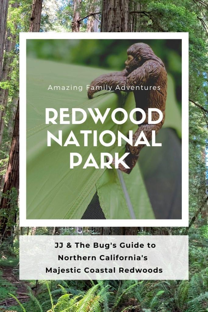 Redwood National Park Pin