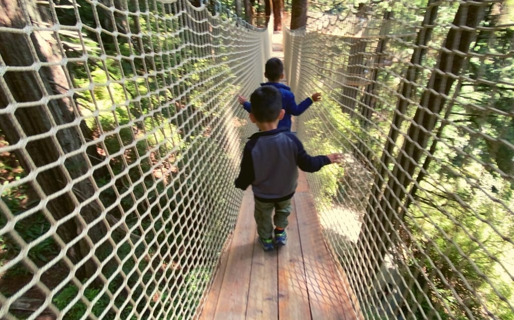 Seeing the Treetops on the Trees of Mystery Canopy Tour