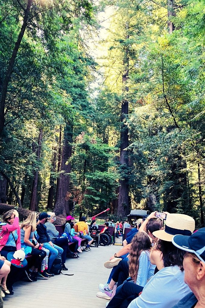 Enjoying the Redwoods from one of the Roaring Camp Steam Trains