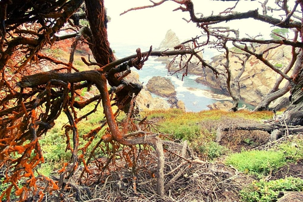 Monterey Bay through the Cypress Trees at Point Lobos